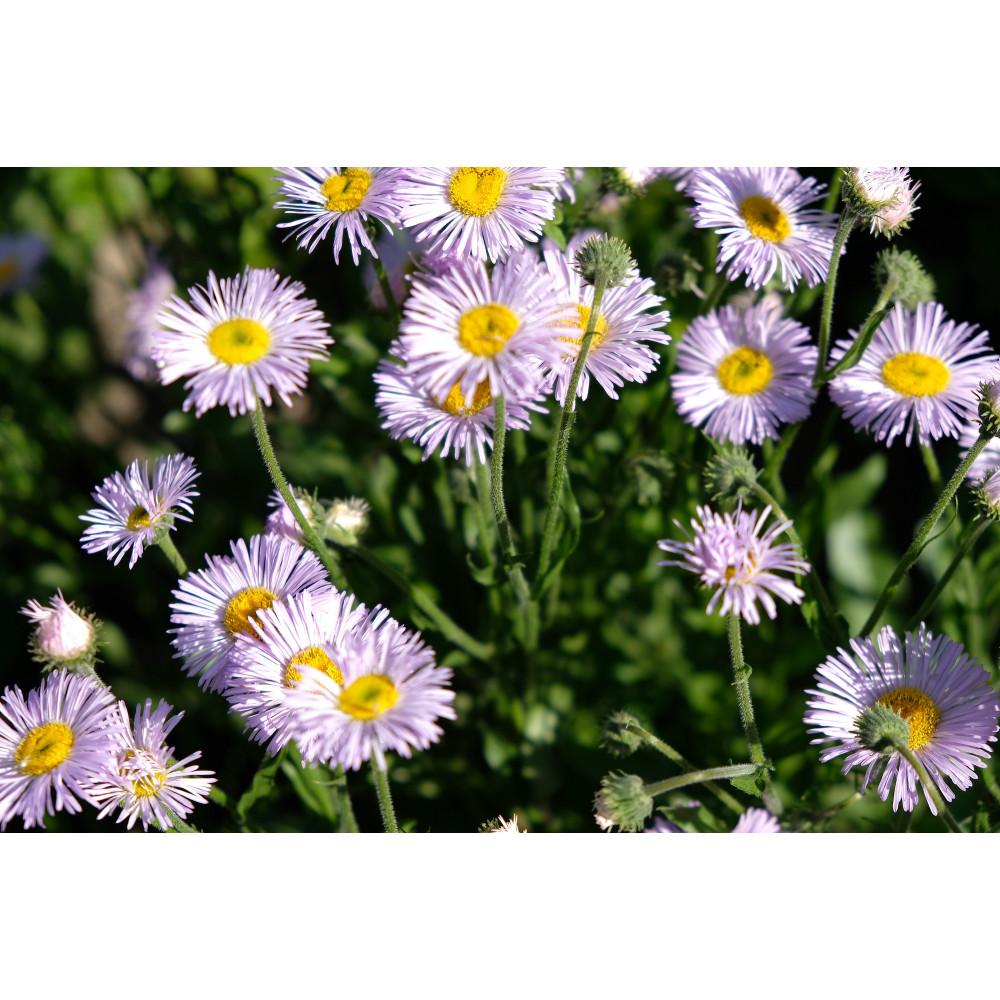 Small petals